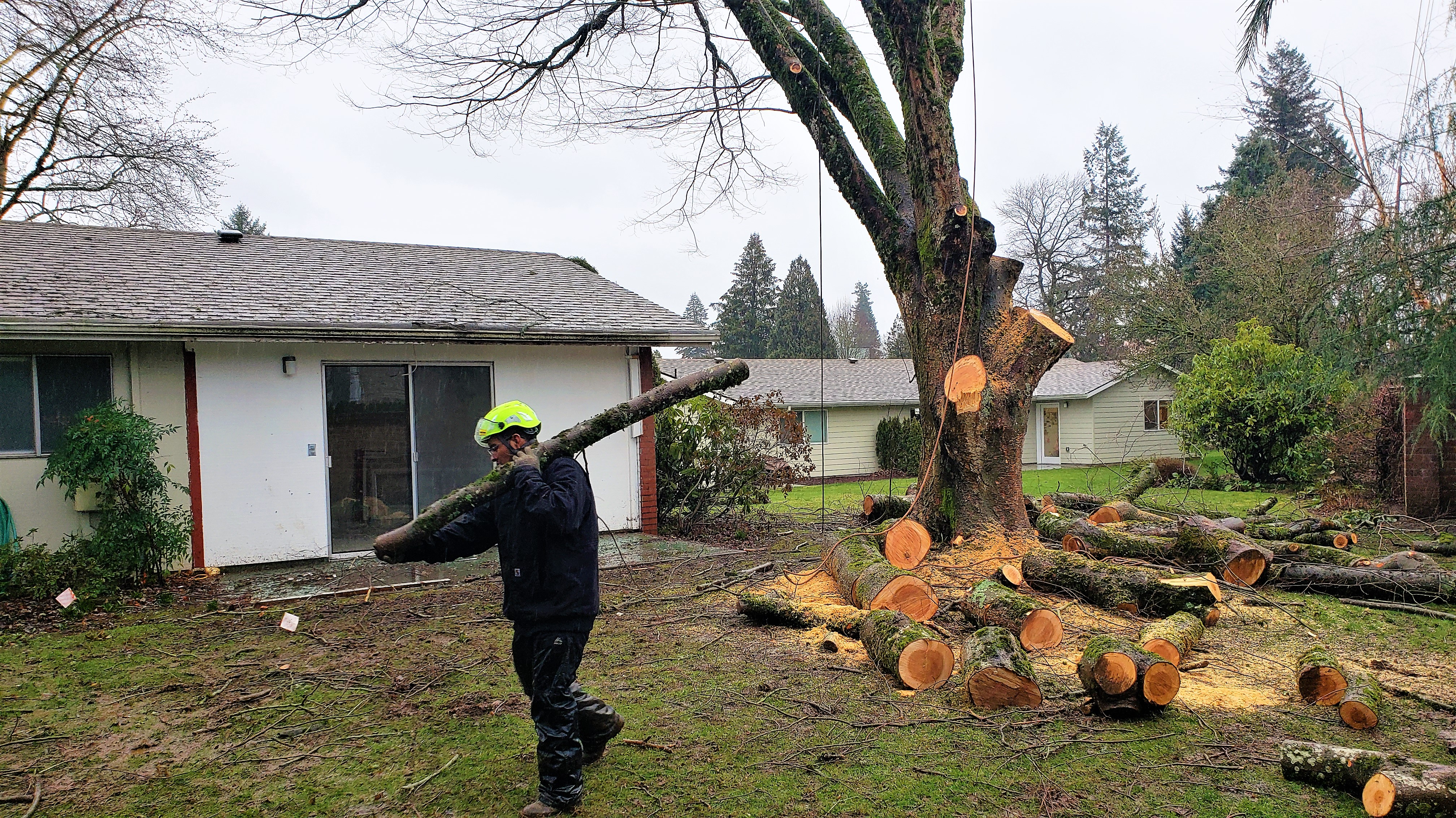 Portland Tree Trimming RH Tree Service Oregon