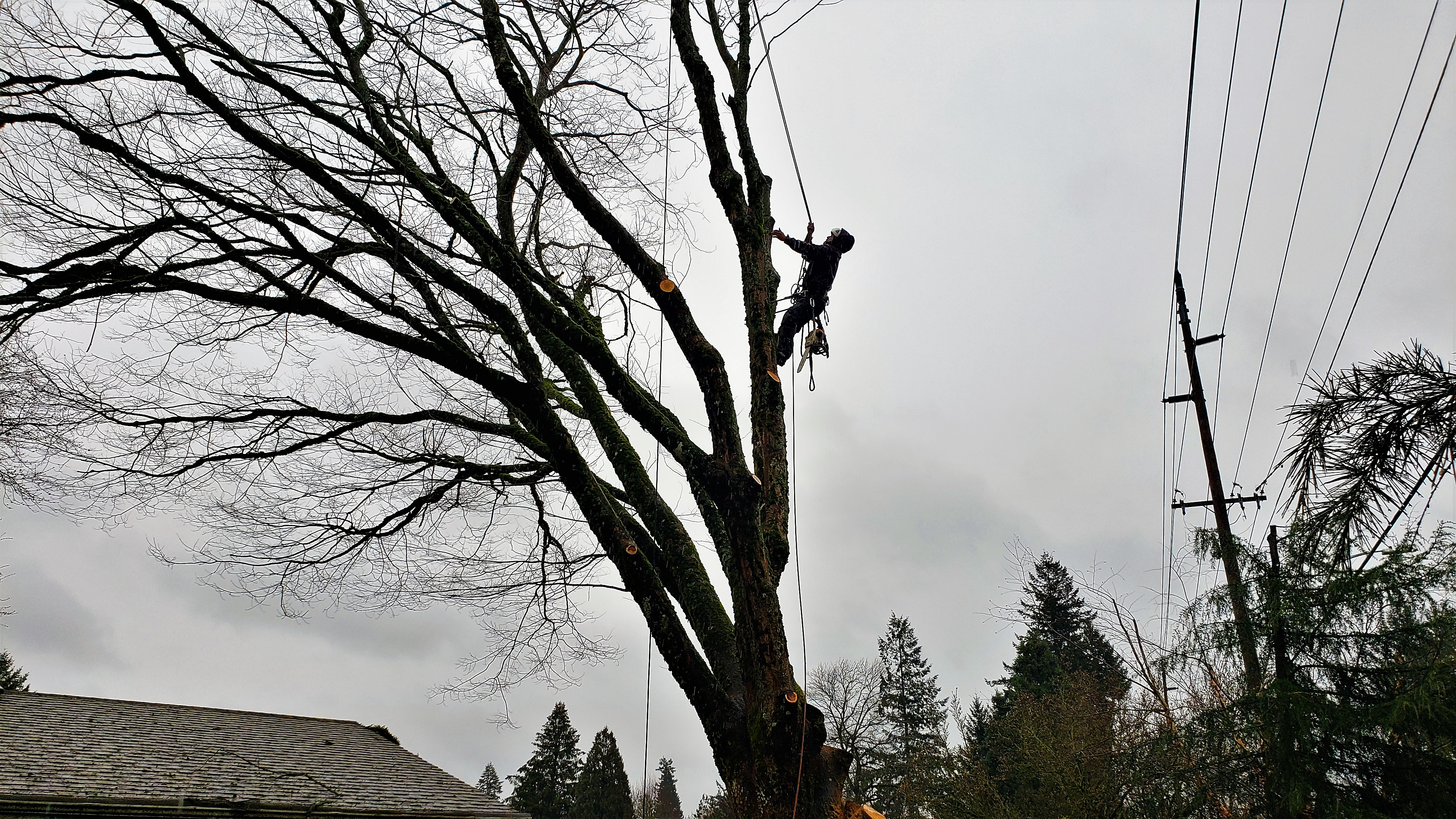 Tree Triming Portland RH Tree Service Oregon